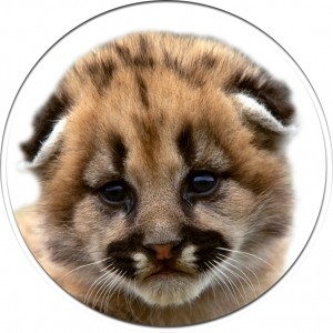 mountain-lion-cub